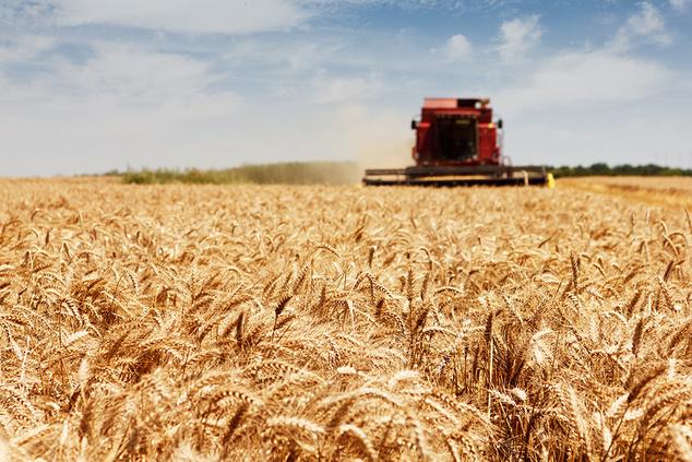 Эрик Найман: «Об «африканской угрозе» аграрному сектору Украины»