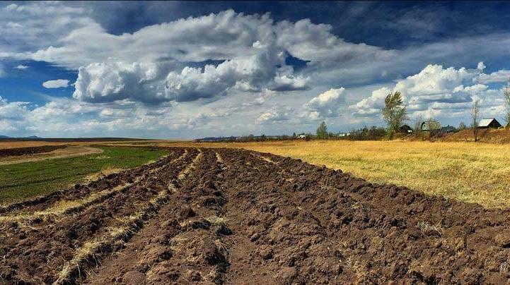 Киевская прокуратура отсудила почти 5 тысяч гектаров в Донбассе