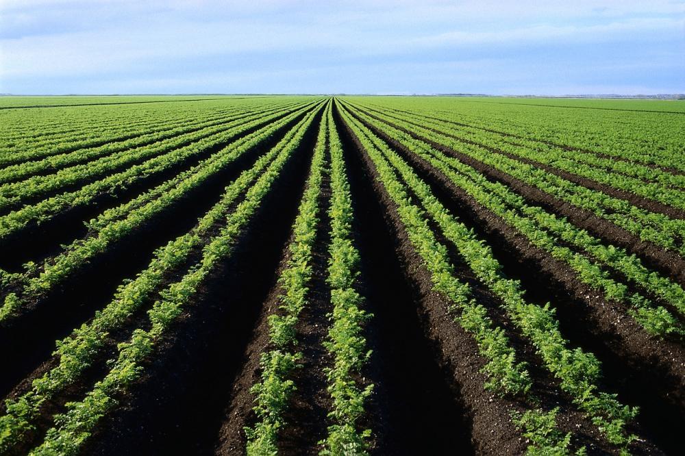 Рада продлит мораторий на реализацию земли до 2019