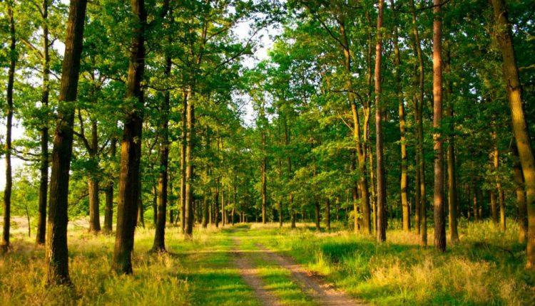 Под Киевом застройщика лишили 6 гектаров леса