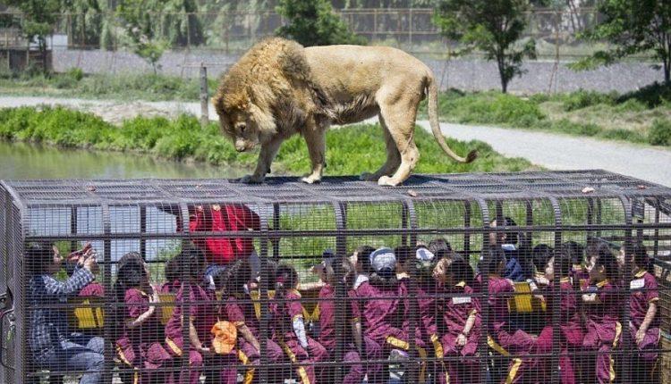 В Китае есть зоопарк, в котором в клетках сидят люди