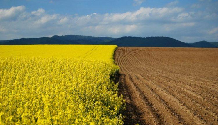 Рада продлила мораторий на продажу земли еще на год